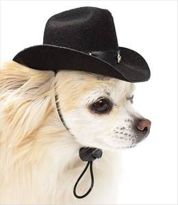 Google didnt disappoint. Internet dogs love tiny hats, it seems.