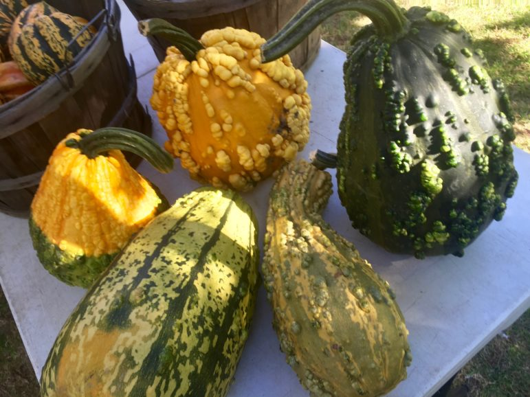 Decorative gourds from Country Dreams Farm.